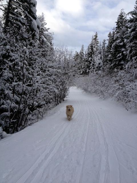 Shaggy Ski